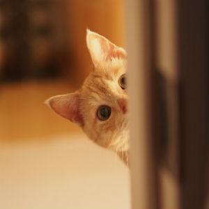 恐怖映像!横たわるやたら胴の長い猫その視線の先には…((;゚Д゚))